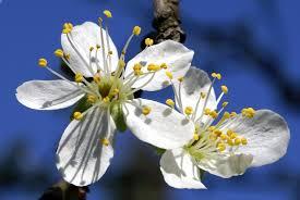 Bildergebnis für blüten