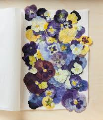 Flower Pressed Paper Pressed Flowers How To Make Your Own Better Homes Gardens