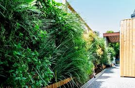 Small Picture The right plants to choose for a vertical garden GardenDrum