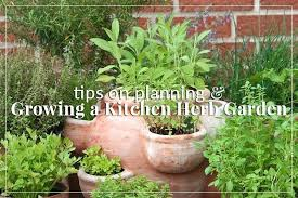 the herb garden tips for growing a kitchen herb garden herb garden layouts pictures