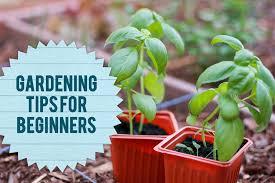beginner gardening. Gardening_tips Beginner Gardening