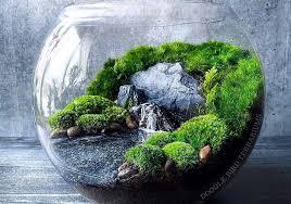 a terrarium besides plants