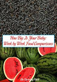 How Big Is Your Baby Week By Week Food Comparisons