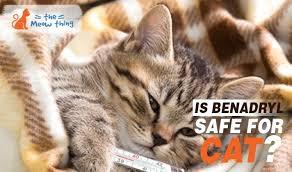 Is Benadryl Safe For Cats? (Warning!) - TheMeowThing