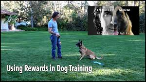 training rewards using rewards in dog training robert cabral dog training video 2
