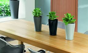best indoor plants for office. Office Desk Home Plants Hardy Indoor Best Within Plant For