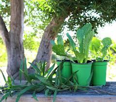 apieceofrainbow garden tips1 2