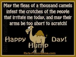Funny Hump Day Quotes Gorgeous Haha Happy Pinte