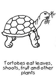 Small Picture How to draw a tortoise for toddlers Step by step PDF to teach