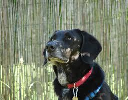 Abschied Nehmen Vom Geliebten Hund Haustiermagazin