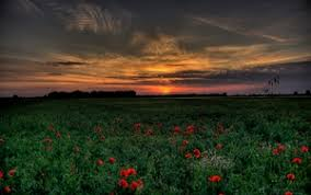 preview wallpaper sunset field poppies landscape