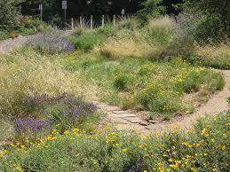 photo of the uc davis arboretum s mary wattis brown garden of california native plants