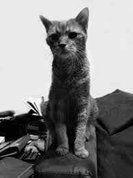 Katzentrauer Katzen Lebende