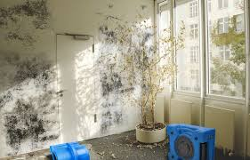 how to get rid of black mold aer