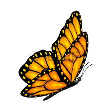 Image result for butterfly against white background