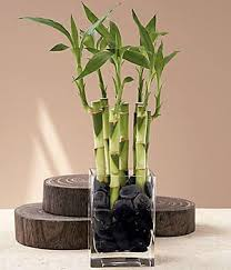 feng shui plant office. classical feng shui money cures for your home or office plant e