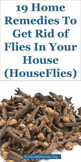 Best 25 Get rid of flies ideas on Pinterest