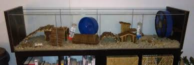 easy detolf dwarf hamster cage