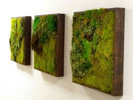 Moss walls: the newest trend in biophilic interiors | Moss wall ...