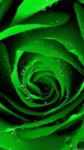 green wallpapers top 4k green color