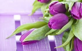 purple hibiscus essays imagenations purple hibiscus by chimamanda ngozi adichie purple hibiscus essays jpg