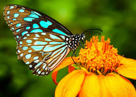 Garden Centre Kitchener We Have Butterflies Imported From Costa Rica To Bring Beauty And