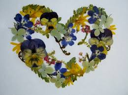 Pressed Flower Greeting Card, Flower of my Heart, 5 x 7, REAL flowers