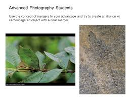 avoiding mergers photography. 6 Advanced Photography Students Use The Concept Of Mergers To Your Advantage And Try Create An Illusion Or Camouflage Object With A Near Merger. Avoiding