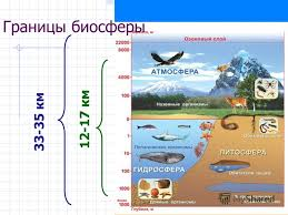 Презентация на тему Биосфера Происхождение и эволюция  8 33 35