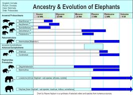 Luxury Endangered Species Charts Mrgesa