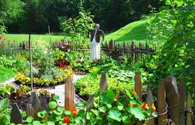 Kitchen Gardening Tips Kitchen Gardens Connect Students With Healthy Food Omar Niode
