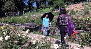 visit photo credit susan ives the berkeley rose garden