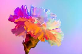 NEON FLOWERS on Behance
