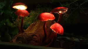 picture of enchanted forest mushroom lights