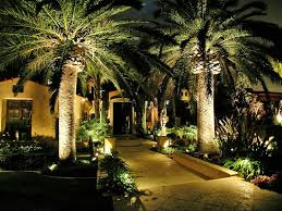 front yard palm trees with lighting