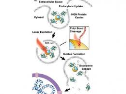 Genome Editing Better Genome Editing
