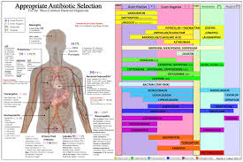 Antibiotic Selection Chart Pdf Appropriate Antibiotic Selection Chart