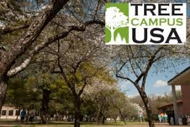 rice university campus trees. Tree Campus USA Logo And Rice Trees Intended University