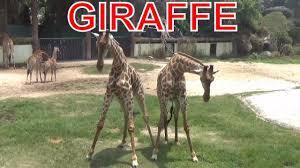 Dạy bé học về các con vật trong vườn thú bằng tiếng anh - Dạy trẻ thông  minh sớm | Động vật, Tiếng anh, Ảnh động