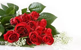 Roses Flowers Wallpapers Red Roses Beautiful Cool Wallpapers