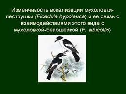 Курсовые и дипломные работы  дипломных работ можно скачать в pdf формате При создании пособия автор ориентировался на специфику преподавания по профилю Зоология