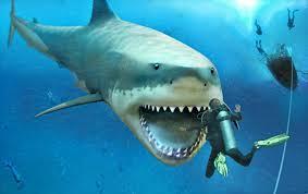 megalodon shark still alive proof 2015. Brilliant Proof THE JAWS OF MEGALODON U2013 SHARK NIGHTMAREu2026AND REALITY For Megalodon Shark Still Alive Proof 2015 D