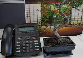 office bonsai. Peace By The Phone Bonsai Tree Office
