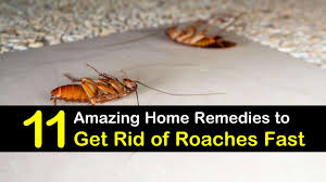 home remes to get rid of roaches fast le1
