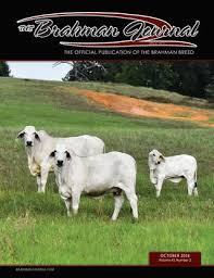Introduced to australia in 1933. The Brahman Journal October 2018 By Caballo Rojo Publishing The Brahman Journal Issuu