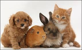 kittens and puppies and bunnies and hamsters. Perfect Hamsters Kittens And Puppies Bunnies Hamsters On U