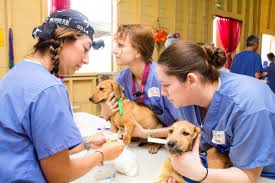 opportunities for students world vets our mission is to they are typically scheduled for a one week duration four veterinary work