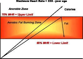 Aerobic Workout Heart Rate Chart Is Your Exercise Program Giving You Results