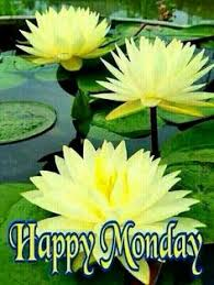 happy monday night google daisy morning blessings lotus nature people es mondays