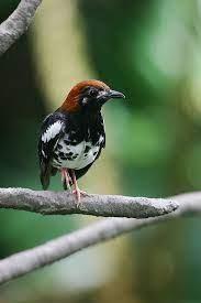 Untuk melihat detail lagu decu kembang ngeplong klik salah satu judul yang cocok. Decu Kembang Kuning Kumpulan Suara Burung Offline For Android Apk Download Lihat Juga Resep Pindang Tongkol Bumbu Kun In 2021 World Birds Pet Birds Beautiful Birds